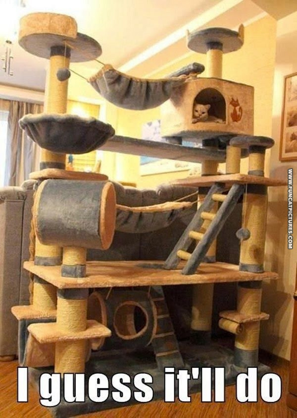 funny-cat-pictures-i-gues-itll-do-fort