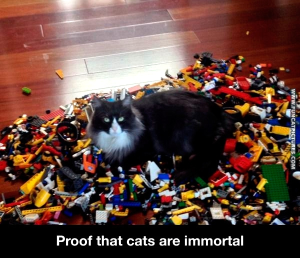 funny-cat-pictures-immortality-lego