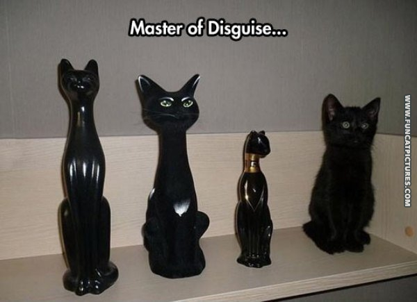 funny cat pictures master of disguise