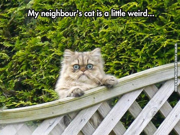 funny-cat-pictures-neighbors-wierd-cat