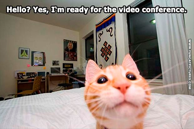 funny-cat-pictures-ready-for-the-video-conference