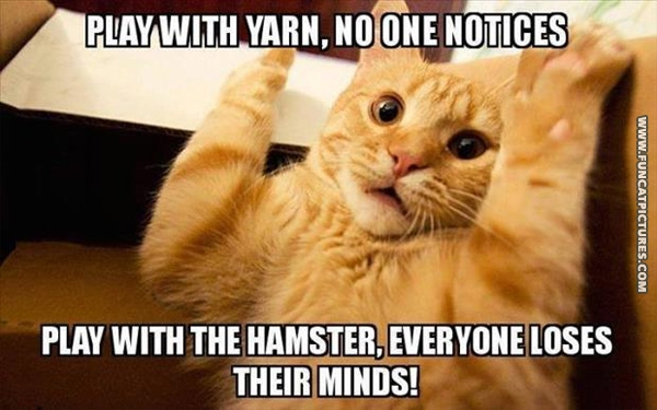 funny-cat-pictures-rules-are-hard