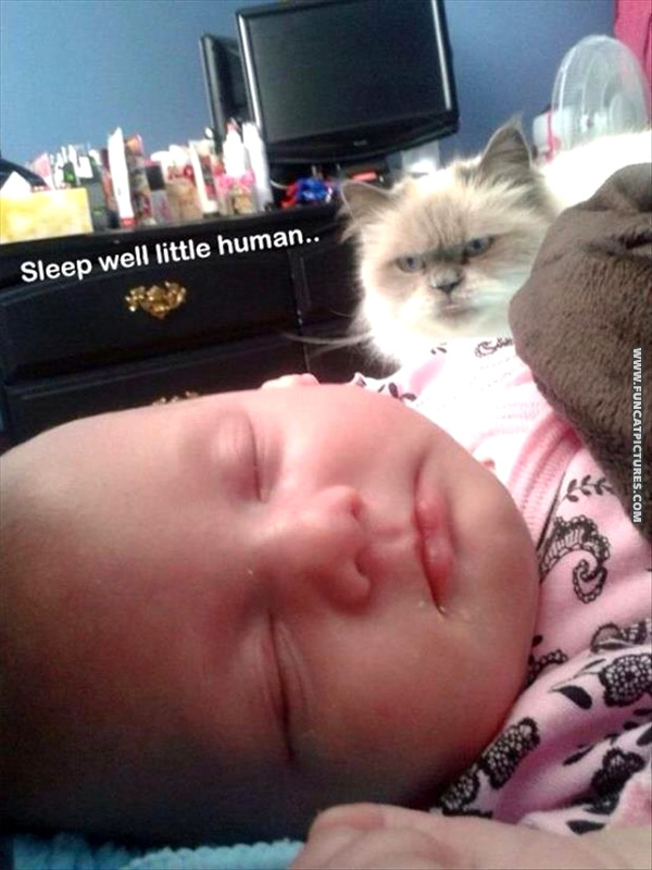 funny-cat-pictures-sleep-well-little-human