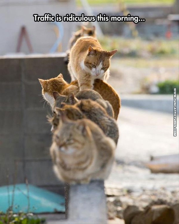 fun-cat-pictures-ridiculous-traffic.jpg