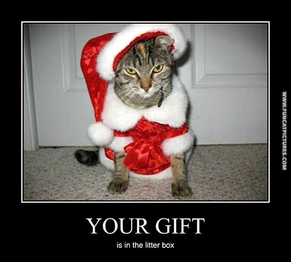 funny-cat-pictures-christmas-gift