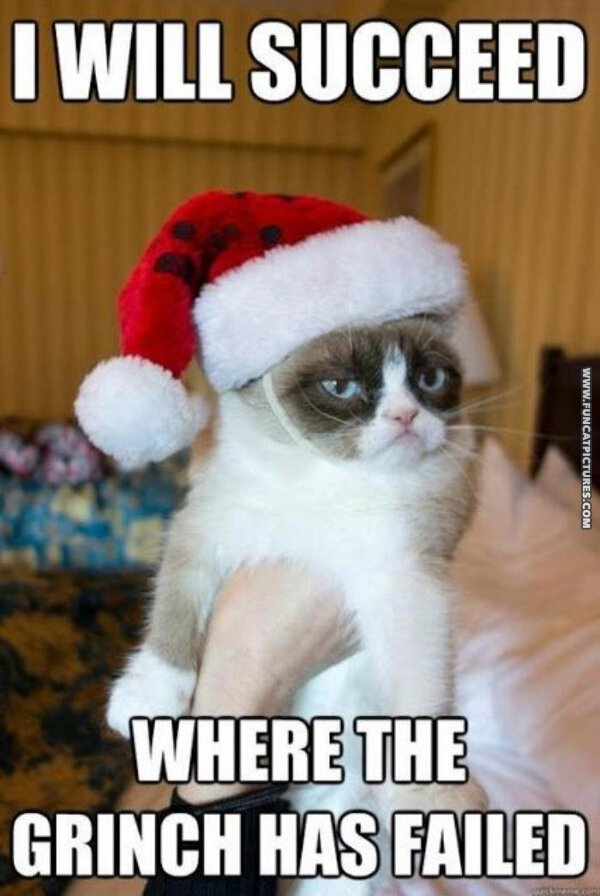 funny cat pictures grumpy the grinch