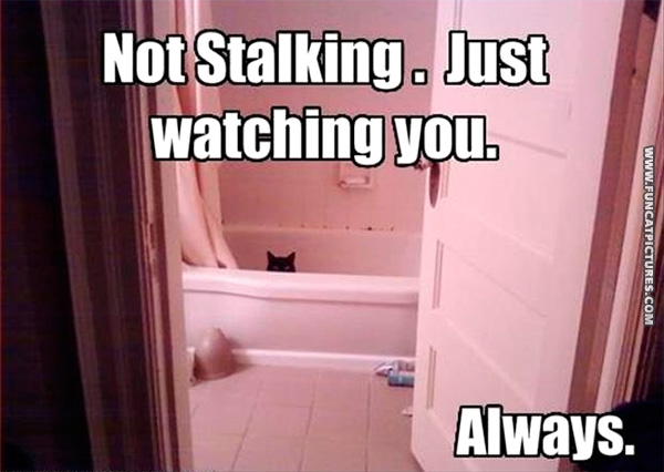 funny-cat-pictures-always-watching-you