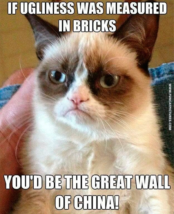 funny-cat-pictures-grumpy-about-your-ugliness