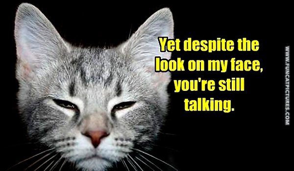 funny-cat-pictures-he-despites-you