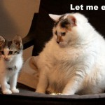 The cat on the right is probably on a diet