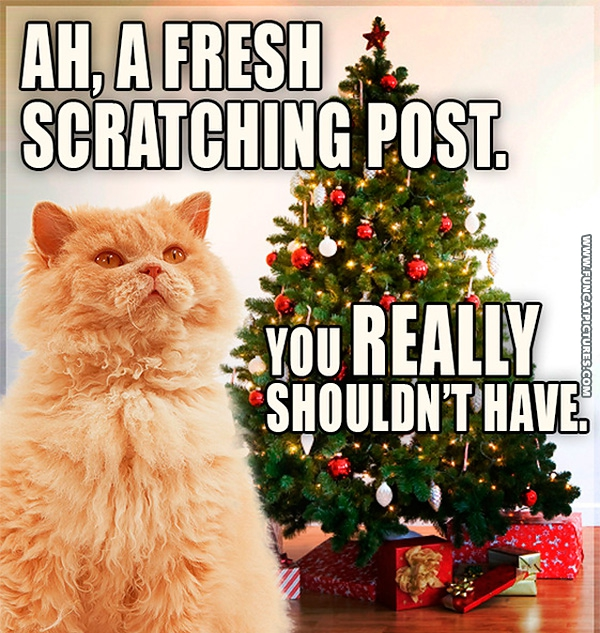 funny-cat-pictures-new-scrathing-pole-christmas-tree