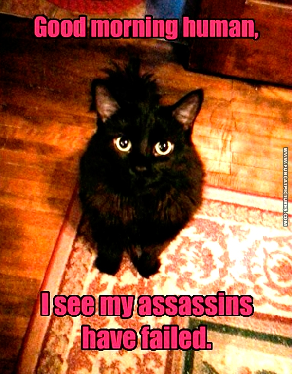 funny-cat-pictures-assasin-fail