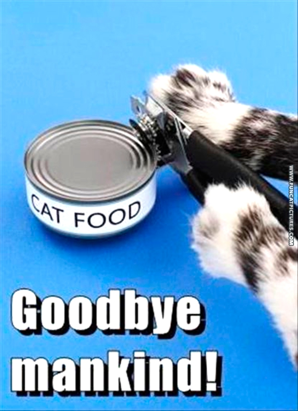 funny-cat-pictures-goodbye-mankind
