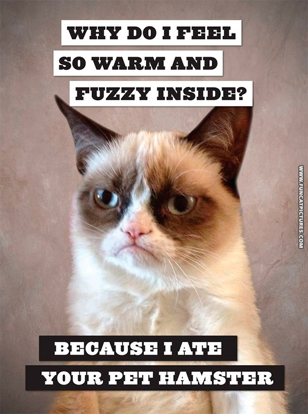 funny-cat-pictures-grumpy-feels-warm