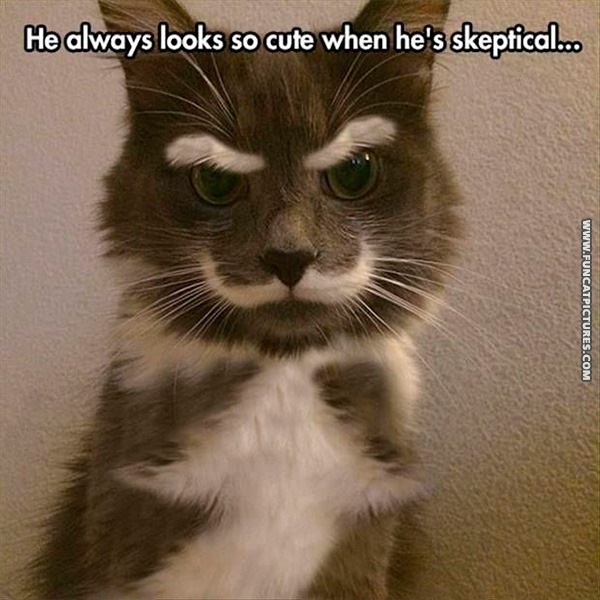 funny-cat-pictures-sceptical-cat