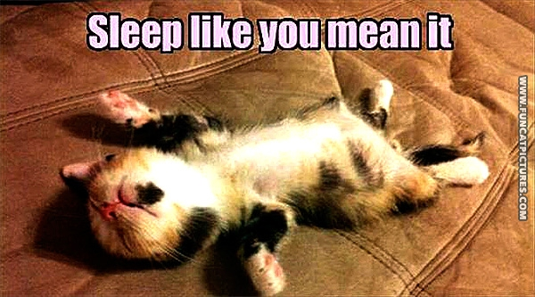 funny-cat-pictures-sleep-like-you-mean-it