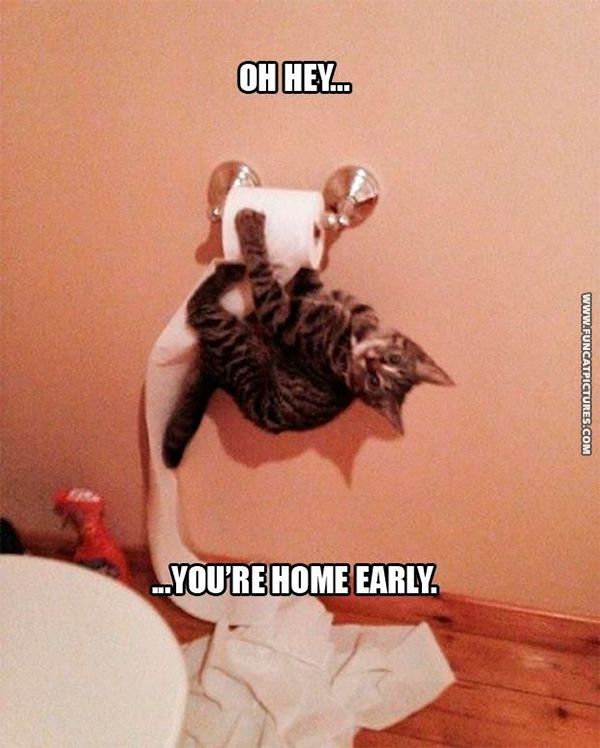 funny-cat-pictures-youre-home-early
