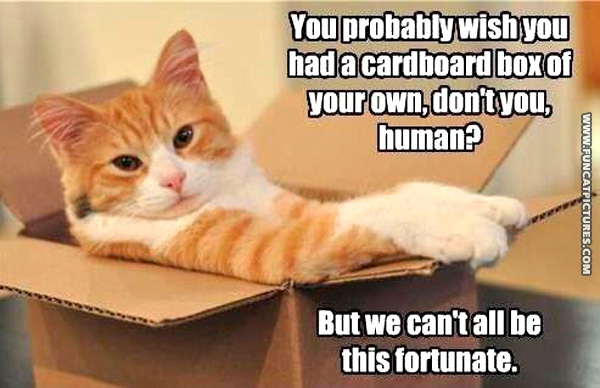 funny-cat-pictures-a-cardbord-box-would-make-you-happy-huh