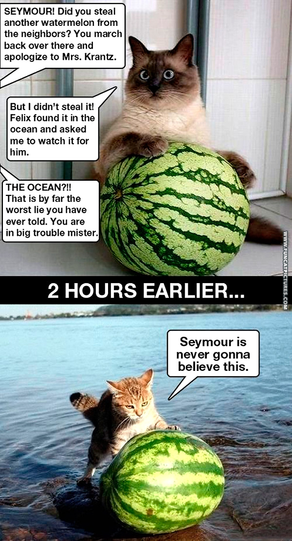 funny-cat-pictures-cat-water-melon-blame