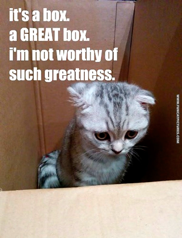 funny-cat-pictures-cat-with-low-confidence