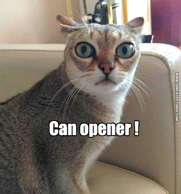 funny-cat-pictures-hears-can-opener