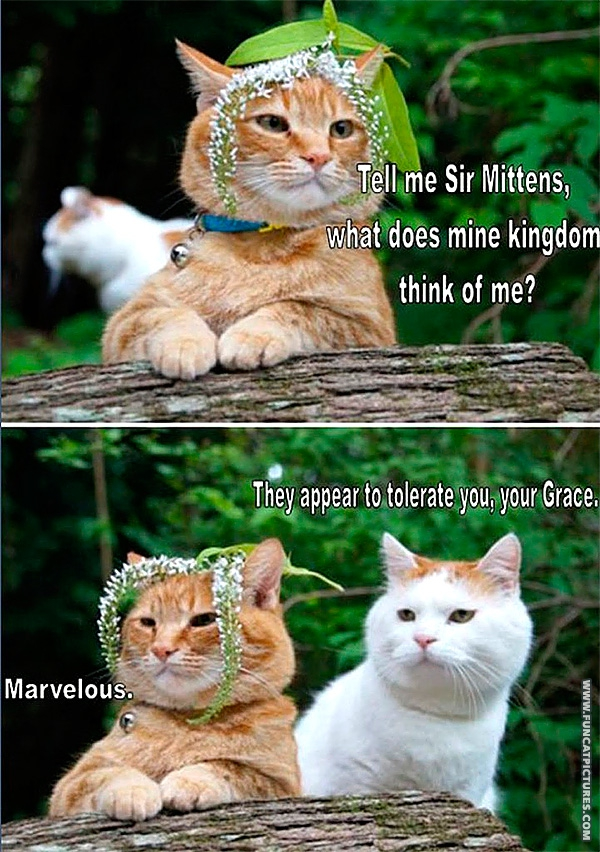 funny-cat-pictures-king-of-cats