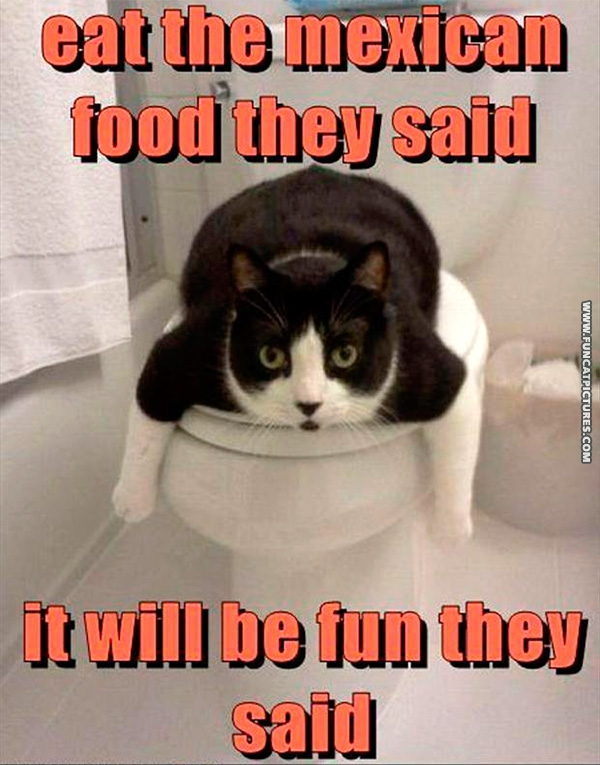 funny-cat-pictures-mexican-food
