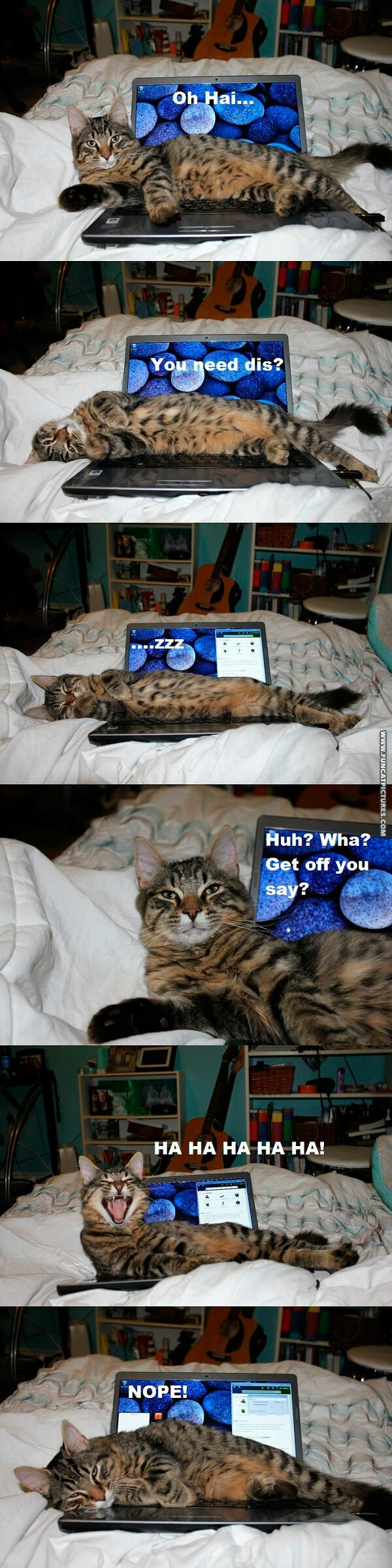 funny-cat-pictures-not-your-computer-any-more