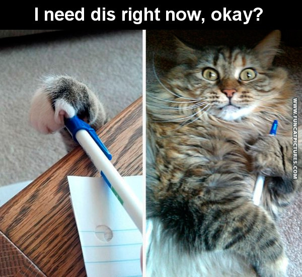 funny-cat-pictures-not-your-pencil
