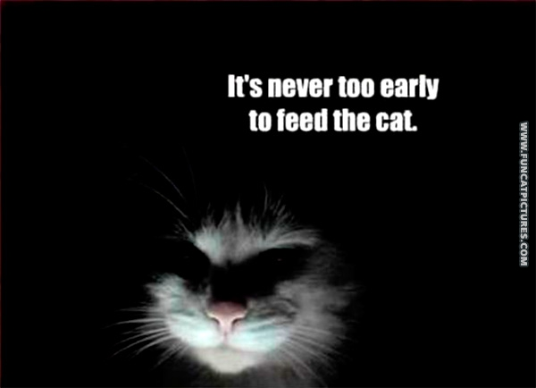 fun-cat-pictrues-its-never-to-early