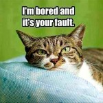 A cat will always blame you