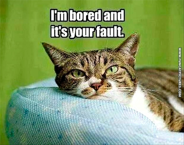 fun-cat-pictures-bored