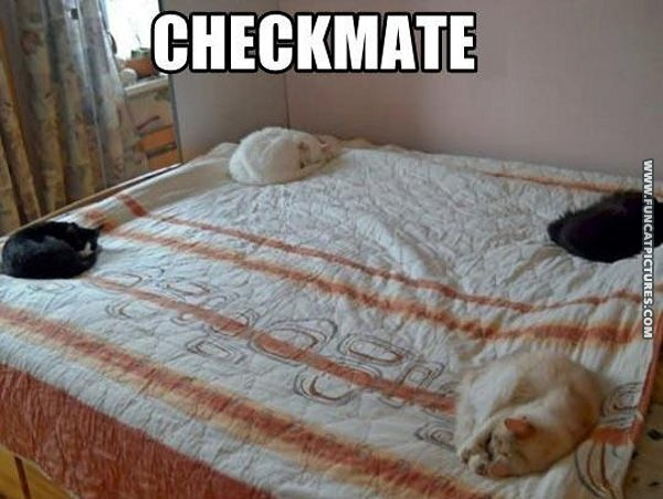 funny cat pictures check mate