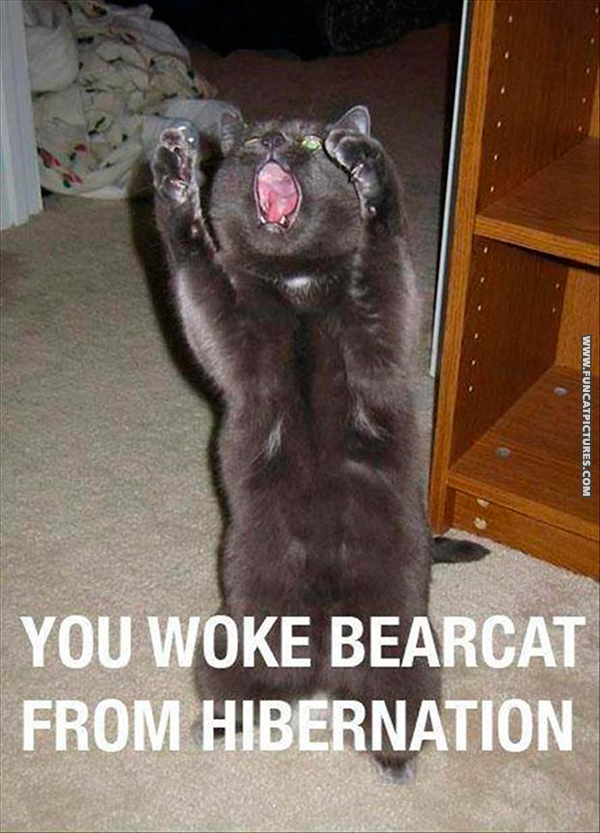 funny-cat-pictures-never-wake-a-cat