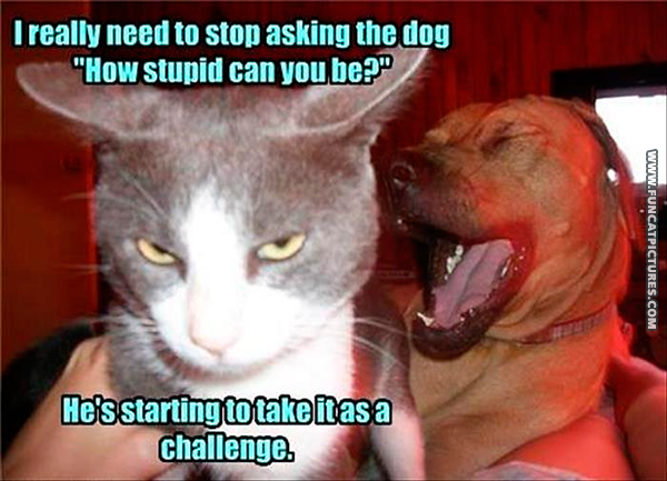 funny-cat-pictures-stupid-dog