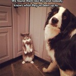 Innocent cat and dog