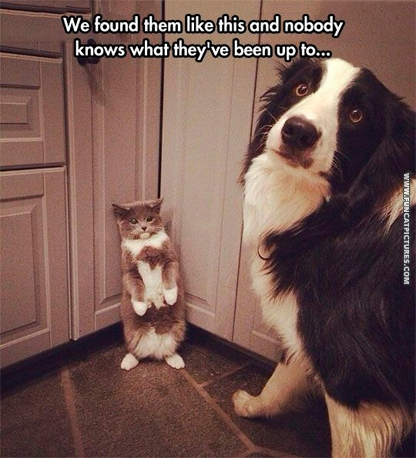 funny-pictures-cat-and-dog-plotting