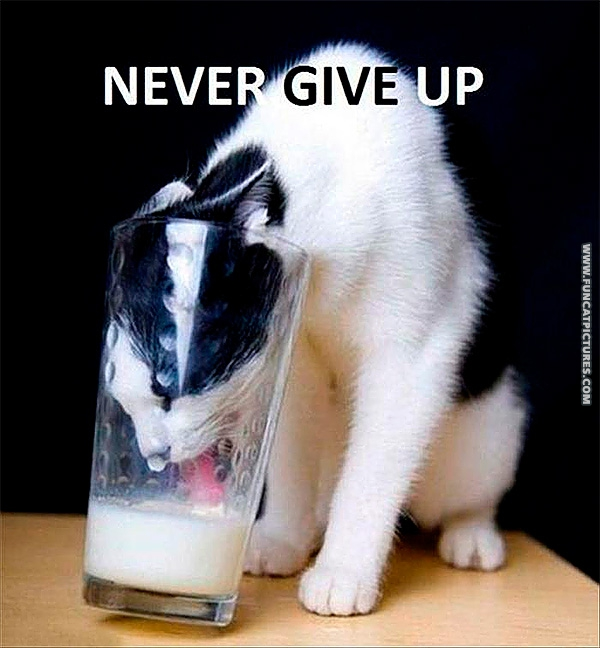 funny-cat-pictrues-never-give-up