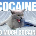 A truly addicted cat