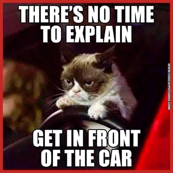 funny-cat-pictures-get-in-front-of-the-car