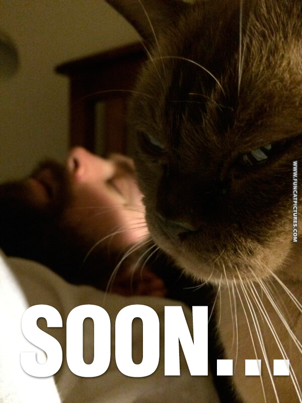 funny-cat-pictures-soon-sleeping