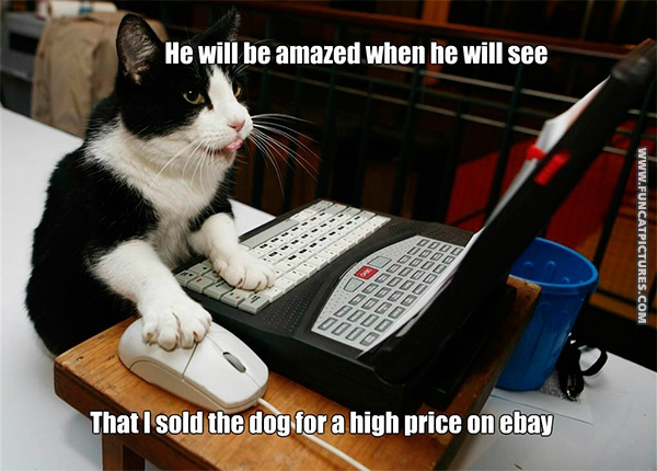 funny-cat-pictures-the-dog-is-sold