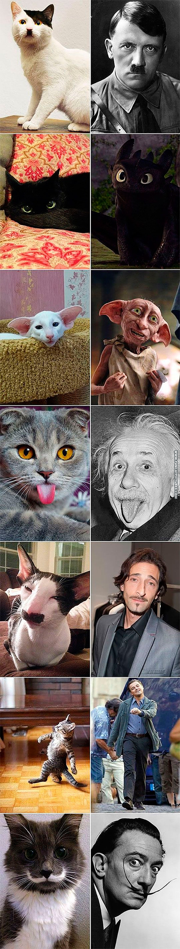 funny-cat-pictures-cats-and-their-doppelganger