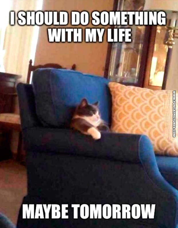 funny-cat-pictures-on-a-couch