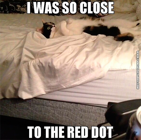 funny-cat-pictures-almost-caught-the-red-dot