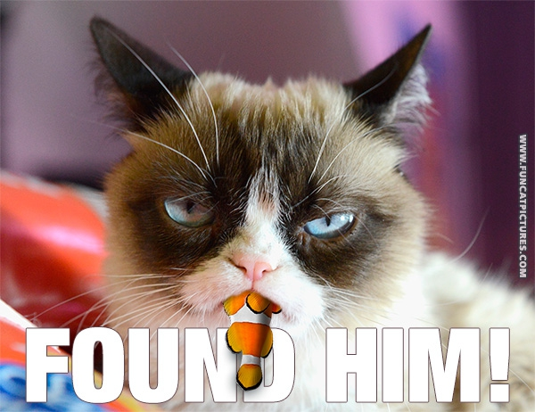 funny-cat-pictures-grumpy-found-nemo
