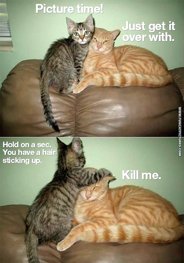 funny-cat-pictures-picture-time