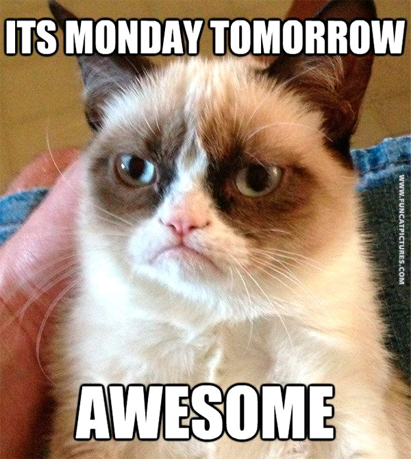 funny-cat-pictures-grumpy-loves-mondays
