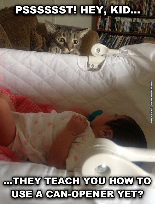 funny cat pictures hungry cat and baby can opener