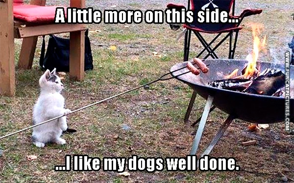 funny-cat-pictures-wll-done-hot-dog